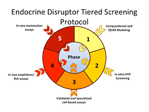 A representative diagram of the draft screening protocol  unveiled at the meeting