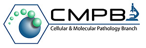 Cellular and Molecular Pathology Branch