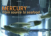 Screenshot of Mercury: From Source to Seafood