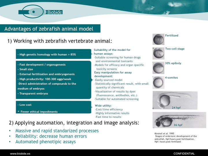 PowerPoint slide from Arantza Muriana, Ph.D., presentation on the utility of zebrafish for toxicity testing