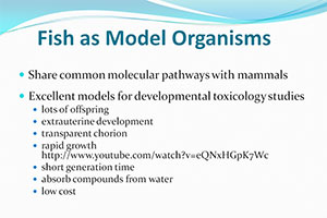 Fish as Model Organisms slide
