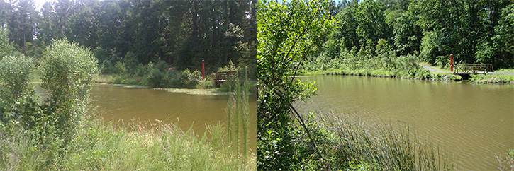 Discovery Lake, left, shows before the intoduction of triploid grass carp and, on the right, shows after
