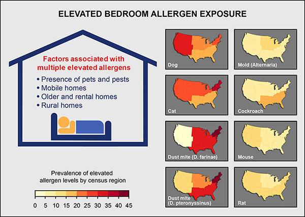 Elevated Bedroom Allergen Exposure