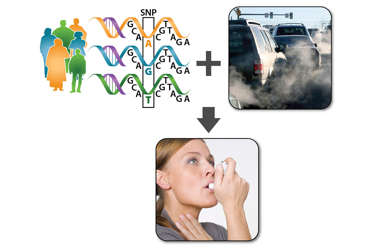 Graphic of research by NIEHS Schurman Garantziotis including woman using inhaler, cars with smog and gene variations