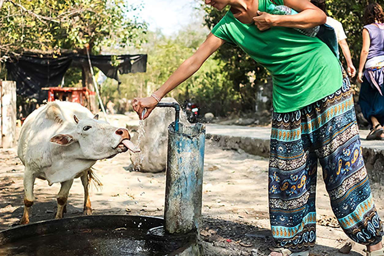cow and a woman share a well