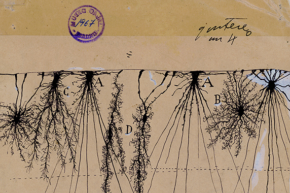 Drawing by Santiago Ramón y Cajal