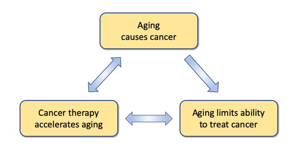 Aging causes cancer <-> Aging limits ability to treat cancer <-> Cancer therapy accelerates aging