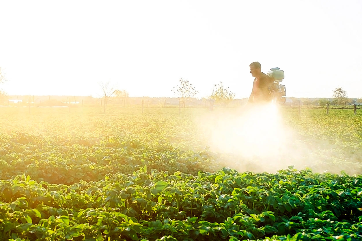 person spraying plants with pesticides in the early morning