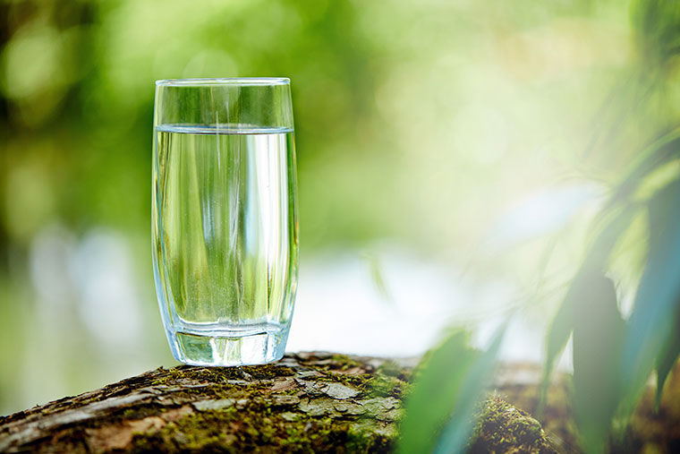 glass of water placed on a tree trunk